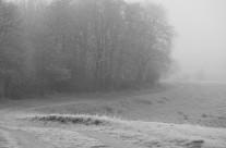 Hellebæk Kohave – vinterkurver